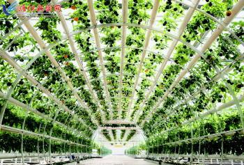 水管种植蔬菜结构图